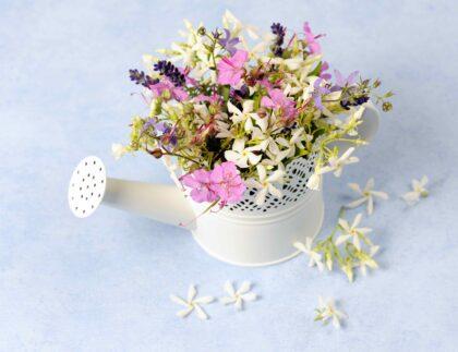 Vandkande med blomster. Planter, der holder luften ren. Koncept for rengøring